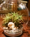 Terrariums, Succulents & Air Plants