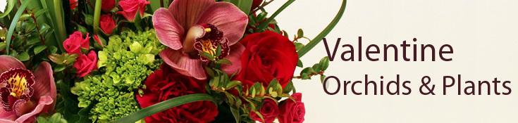Valentine Orchid Gardens & Plants